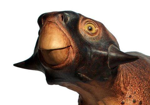 Psittacosaurus Replica