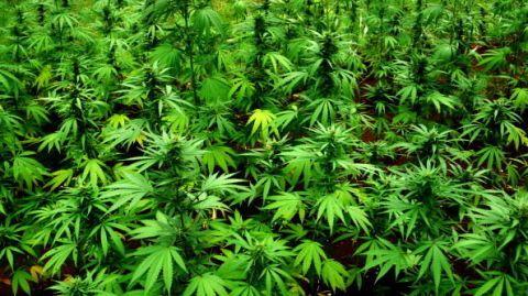 Marijuana Mausoleum