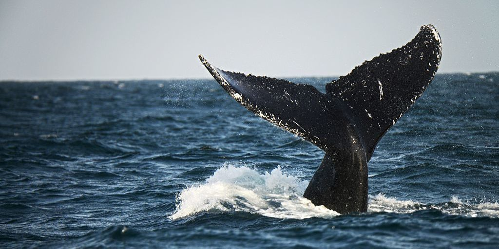 9 Amazing Close Encounters of the Whale Kind