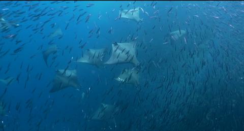 Raja Ampat fish