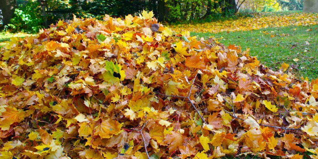 Fall Lawn Care Tips   Green Drop Lawns