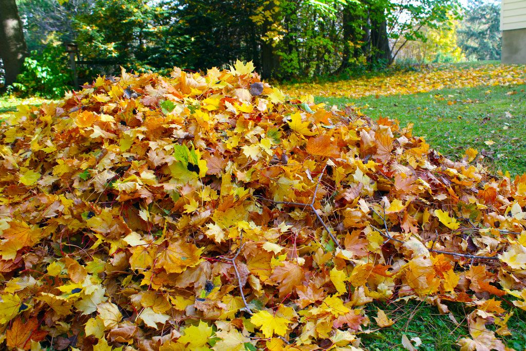 Lawn Care Fall Tips 2018