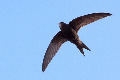 Daytime, Brown, Organism, Bird, Vertebrate, Beak, Wing, Adaptation, Ecoregion, Flight,