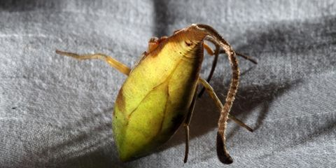 leaf-spider.jpg