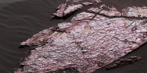 mars-mud.jpg