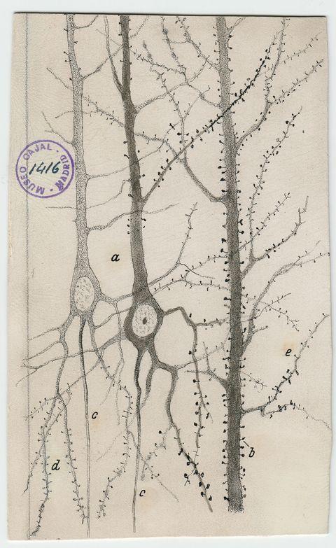 Branch, Twig, Botany, Illustration, Paper, Drawing, Visual arts, Artwork, Plant stem, Paper product,