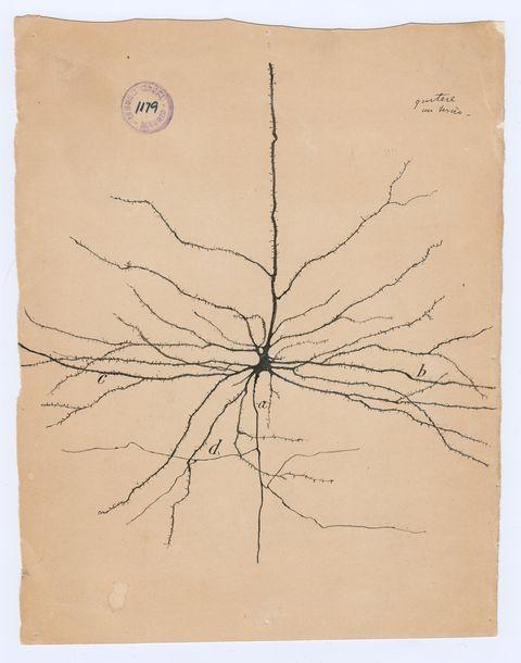 Line, Botany, Paper, Art, Paper product, Beige, Artwork, Document, Illustration, Drawing,