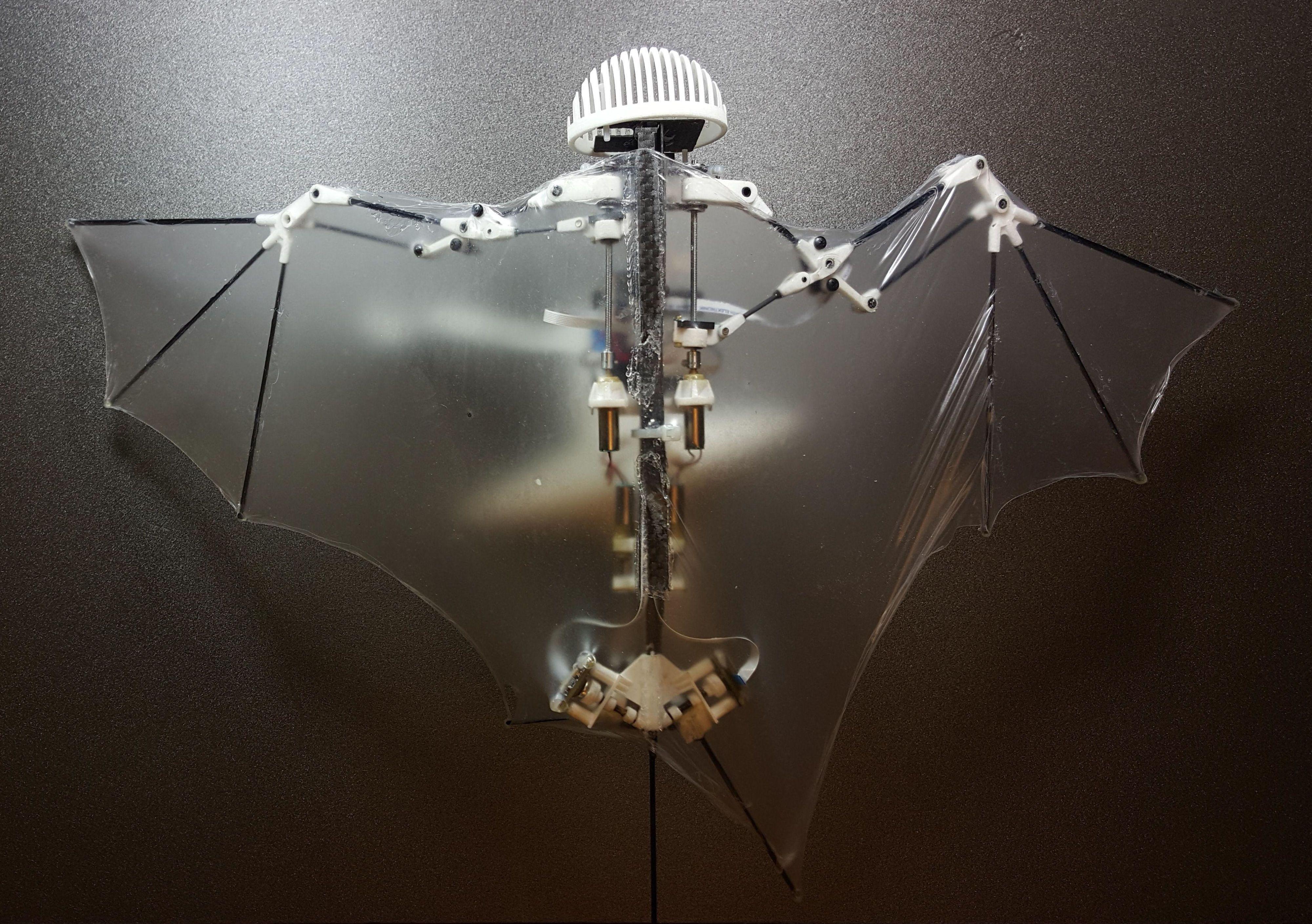 Behold Bat Bot, the First Flying Robot Bat