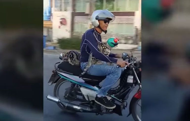 This Man Rides His Motorcycle With His Cats