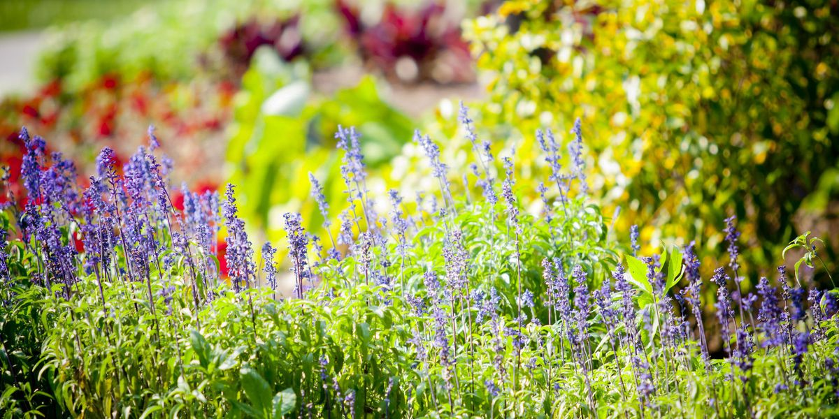 Roses In Garden: Best Vegetables And Flowers To
