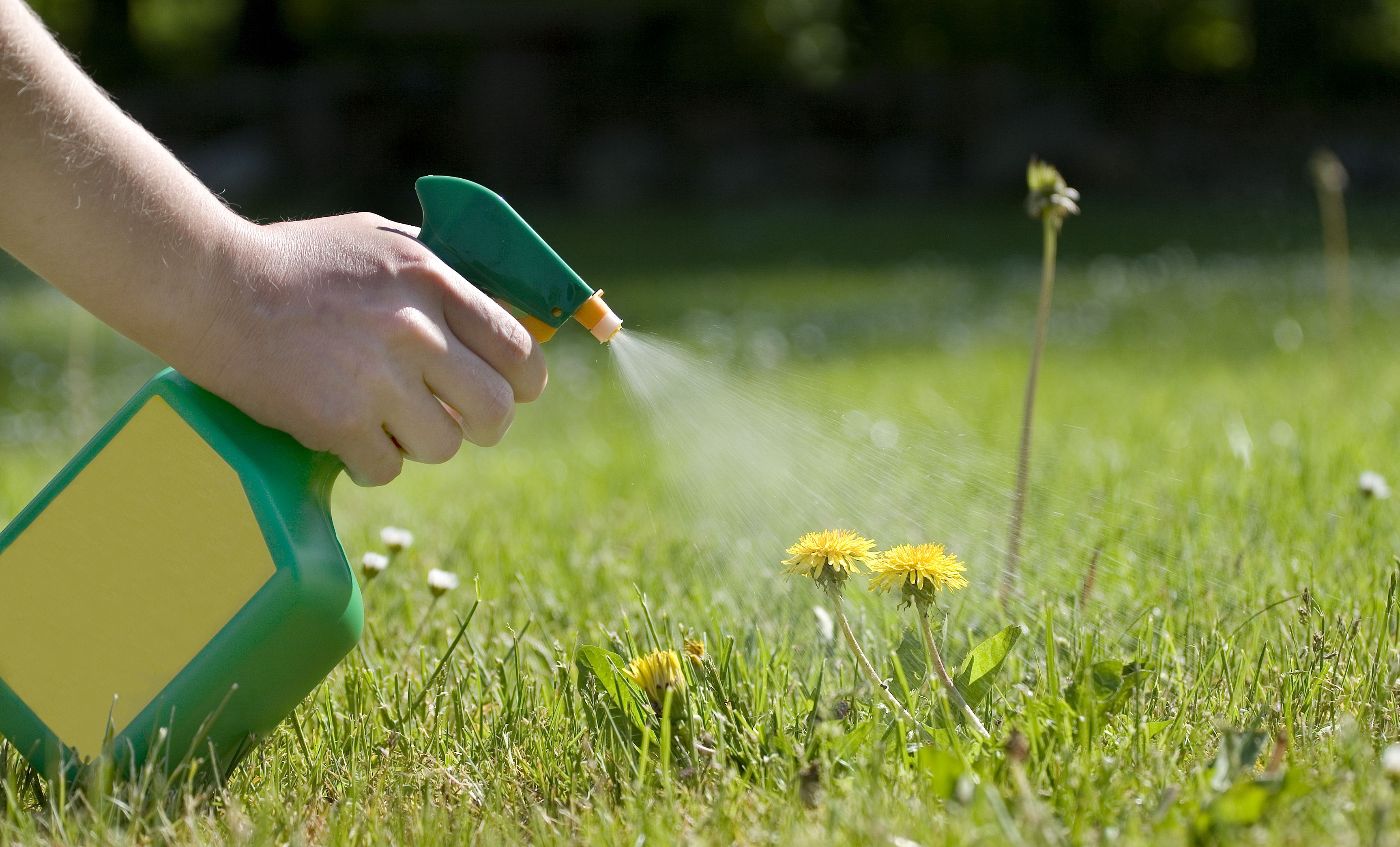 Best Weed Killer for Your Lawn - How to Kill Weeds this Spring