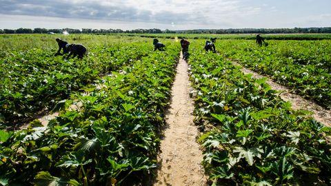 Farm, Agriculture, Field, Plantation, Rural area, Farmworker, Soil, Plain, Crop, Pasture,