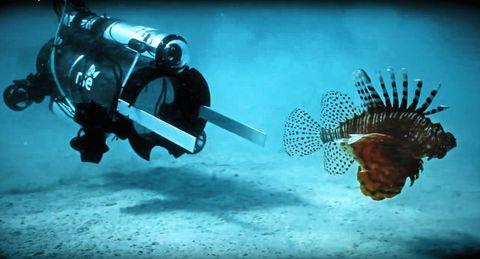 lionfish, Underwater, Organism, Scuba diving, Fish, Scorpionfish, Marine biology, Recreation, Bony-fish,