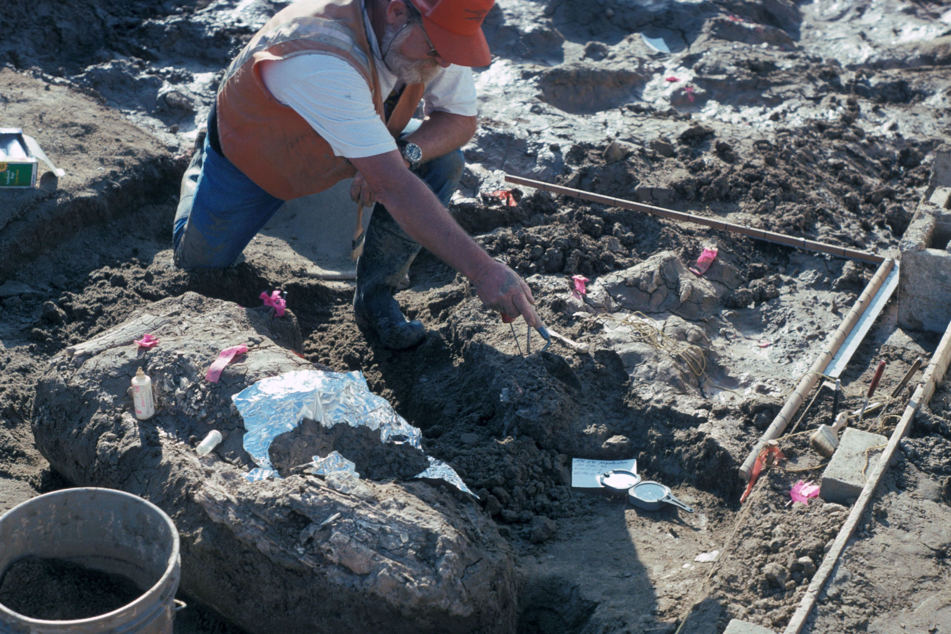 Jaw-Dropping Study Says Some Human Relative Was in California 130,000 Years Ago