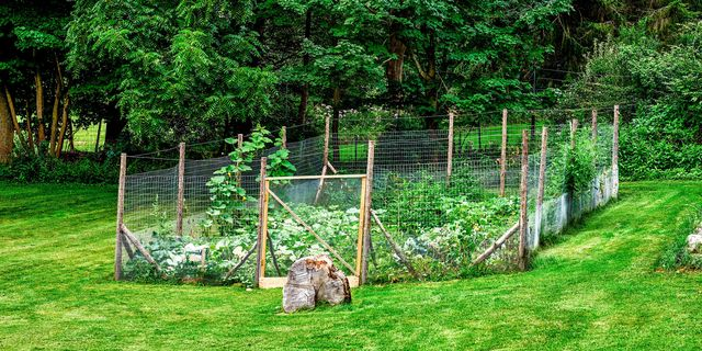 great garden fence ideas for 2017 how to build a garden fence - Vegetable Garden Fence