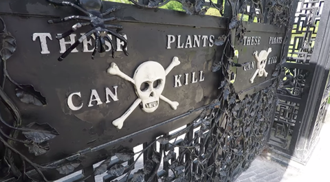 Take A Tour Of The Poison Garden Where Plants Can Kill