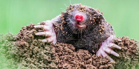 Organism, Skin, Soil, Facial expression, Adaptation, Snout, Terrestrial animal, Nail, Marine mammal, Paw,