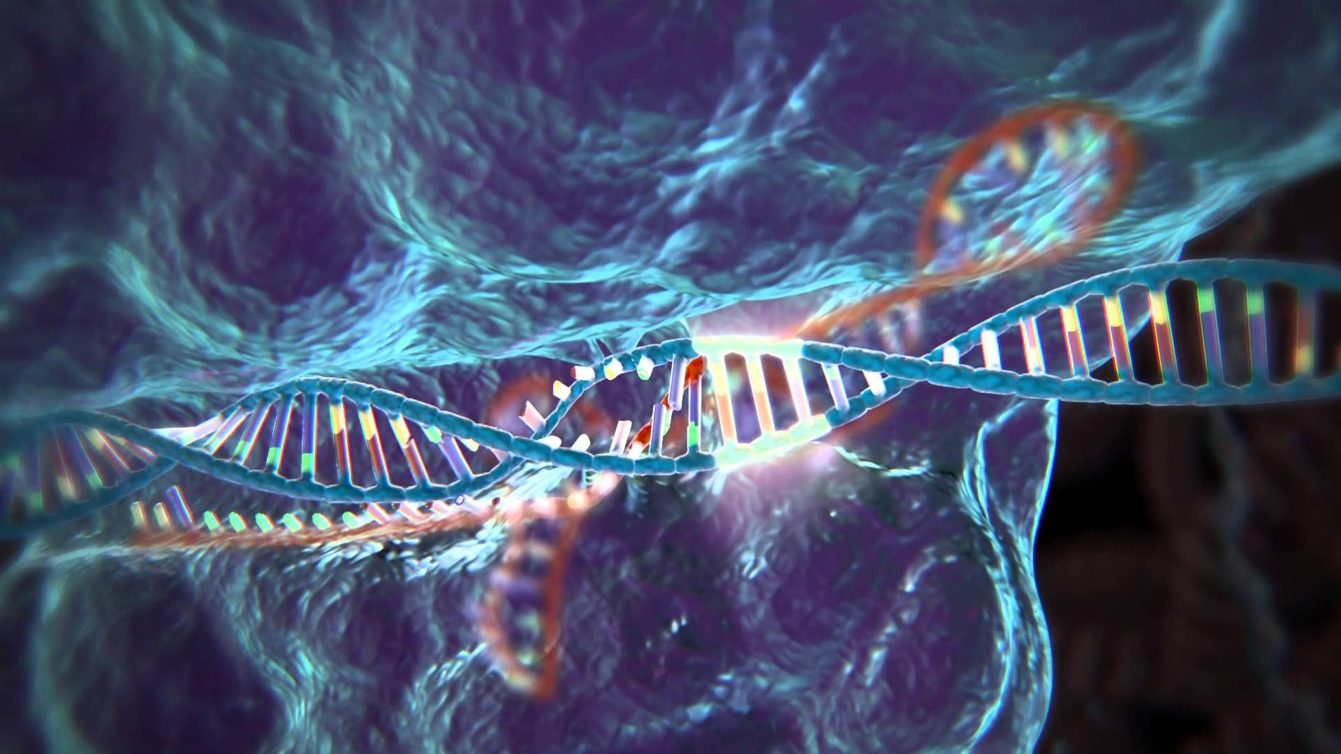 CRISPR Offers New Line of Attack on Muscular Dystrophy