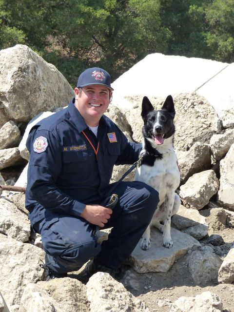 Rocket the search and rescue dog