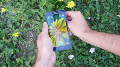 Hand, Plant, Flower, Finger, Grass, Wildflower, Technology, Electronic device, Thumb, Mobile phone,