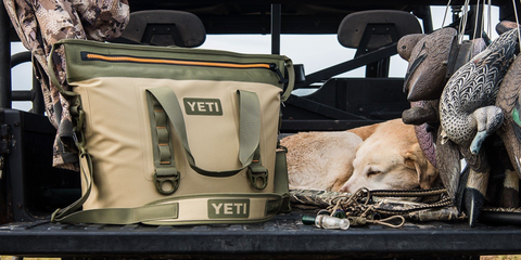 Canidae, Fawn, Vehicle, Car, Carnivore,