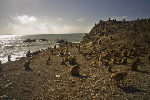 Rock, Coast, Sky, Sea, Shore, Ocean, Wildlife, Beach, Coastal and oceanic landforms, Photography,