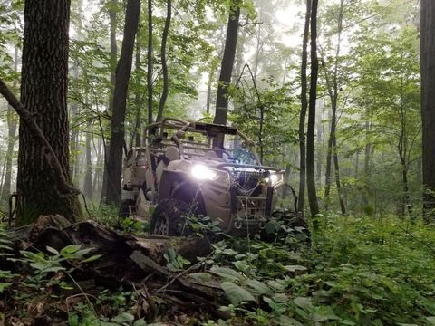 Nature, Forest, Natural environment, Jungle, Tree, Woodland, Green, Off-roading, Vehicle, Nature reserve,