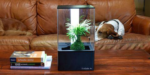 Room, Canidae, Hardwood, Grass, Living room, Table, Flooring, Plant, Furniture, Floor,