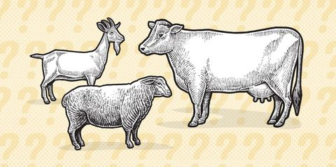 goat-riddle.jpg