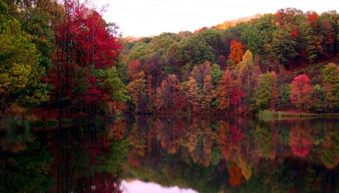 Reflection, Nature, Leaf, Tree, Natural landscape, Red, Autumn, Pond, Wilderness, Natural environment,