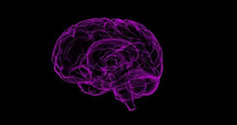 Brain, Purple, Violet, Organ, Magenta, Graphic design, Illustration, Graphics,