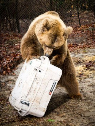 The Results of Our Bear-Proof Cooler Test Are In