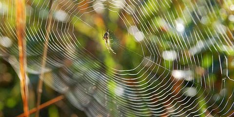 Nature, Natural environment, Spider web, Light, Natural material, Atmospheric phenomenon, Botany, Terrestrial plant, Close-up, Macro photography,