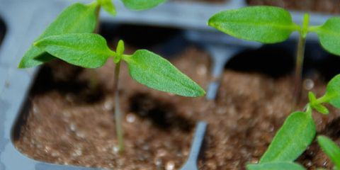 Save Money And Get A Head Start On Your Garden By Starting Plants And  Vegetables From Seed In Your Home. A Garden Expert Shares Her Secrets For  Successful ...