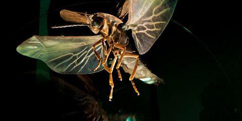 Organism, Insect, Invertebrate, Arthropod, Darkness, Wing, Light, Macro photography, Pollinator, Pest,