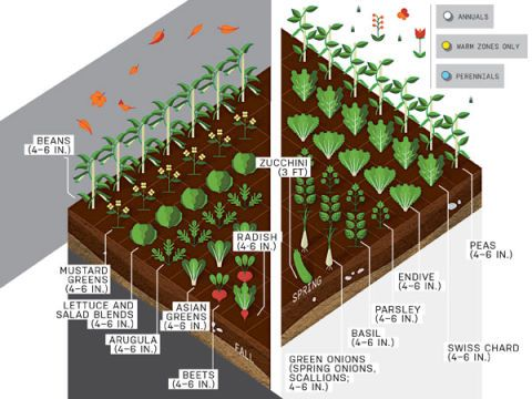 Eat What You Sow: How to Start a Vegetable Garden