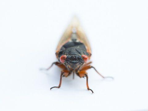 Invertebrate, Organism, Insect, Arthropod, Pest, Amber, Beauty, Macro photography, Grey, Photography,