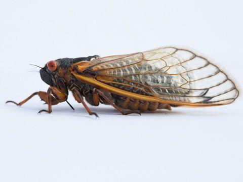 Invertebrate, Insect, Organism, Arthropod, Pest, Amber, Wing, Light, Beauty, Black,