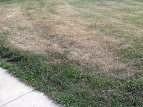 Problem: Grass Is Wilting or Turning Brown