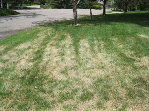 8 Things Your Lawn Is Trying to Tell You