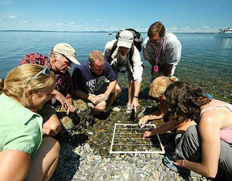 students learn about marine ecology on the shore at college of the atlantic