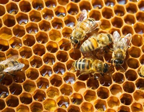 Beekeeping 101: DIY Beekeeping, Supplies, Plans and Ideas