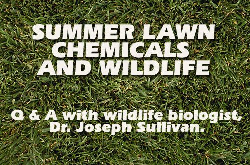 Summer Lawn Chemicals And Wildlife