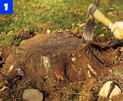 Best Stump Grinder Tips How To Grind A Tree Stump Yourself
