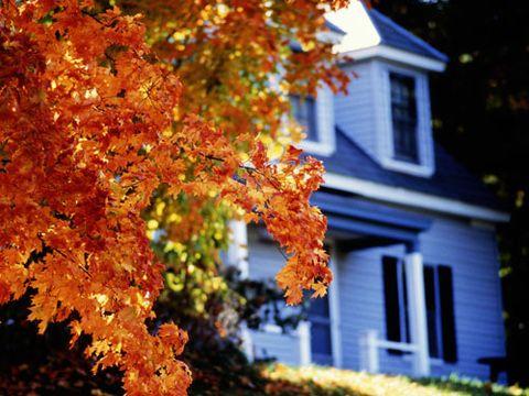 Yellow, Deciduous, Leaf, Orange, House, Amber, Autumn, Woody plant, Twig, Home,