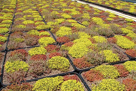 GreenGrid's Drought-Tolerant Roof Plants: Keeping It Cool