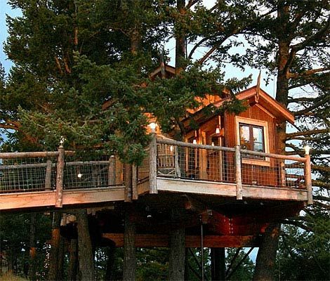 Wood, Property, Tree, House, Woody plant, Real estate, Home, Tree house, Lumber, Porch,