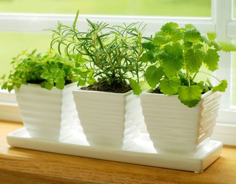 herbs growing in containers on window sill
