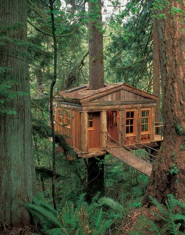 bluemoon treehouse in woods