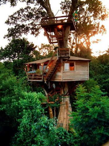 10 best treehouse plans and designs coolest tree houses ever up in a fig tree malvernweather Choice Image